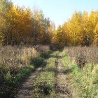Осенняя дорога :: Юрий