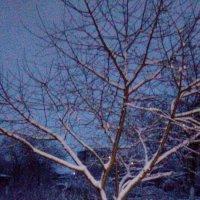 Зима :: Maks. vip.026
