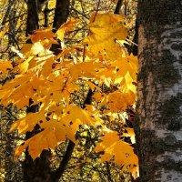 Осень золотая :: Милешкин Владимир Алексеевич