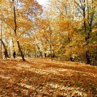 Золотая осень в Коломенском. :: ТаБу