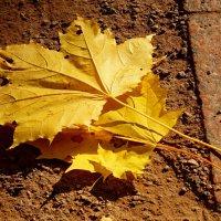 Осень золотая... :: Галина Кучерина