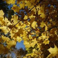 Золотая Осень :: Svetlana (Lucia) ***