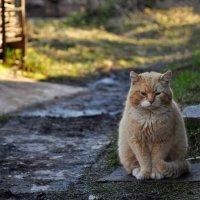Очень,очень грустный кот... :: Татьяна Глинская