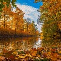 Осень в ЦПКО :: Дмитрий Рутковский