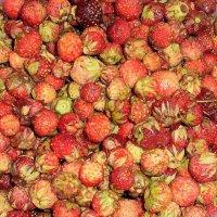 Сладка ягода. :: венера чуйкова