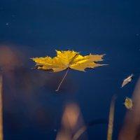 Осень... :: Александр Буторин