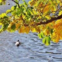 Осенний этюд :: Aida10