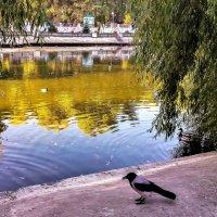 В парке :: Юрий K...