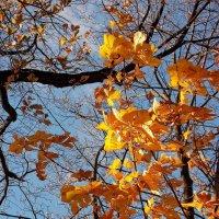 Осенние листья :: Фотогруппа Весна.