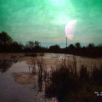 Лунная ночь. :: Анатолий