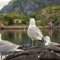 Северная Норвегия. Лофотенские острова. Москинес. Ожидание переправы на материк. :: Надежда Лаптева