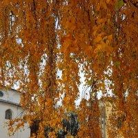 Осенняя берёзка :: Екатерина