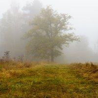 Туман. :: Alexander Furasev