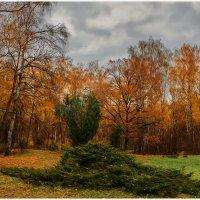 Поиски кедровки :: Pepsovich