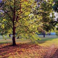 Осень :: Борис Соловьев