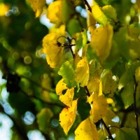 краски осени :: Ustas FritZZZ