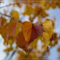 цвет осени :: Анастасия Сосновская