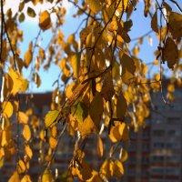 Осень :: Екатерина Кучко