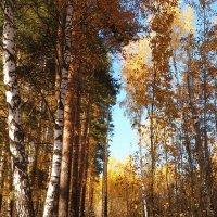 Осенний лес всегда прекрасен :: Ирина Пыхачева