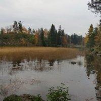 Осень в парке Монрепо :: Светлана Петошина