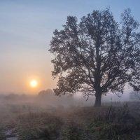 Туманное утро :: Виктор Позняков