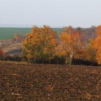 Осенний пейзаж :: просто Борисыч