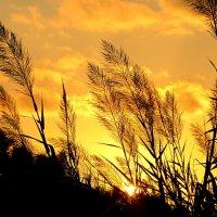 Закат на фоне камыша :: Жанна
