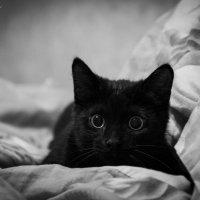 Черный кот :: Мария Белая