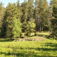 В лесу на Валааме. :: sav-al-v Савченко