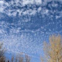небо осенью :: Валерия Шамсутдинова