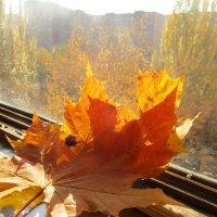 Осень. :: Зинаида