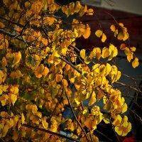 Осенняя урючина в лучах утреннего солнца :: Светлана