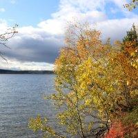 Осенний лес :: Ольга
