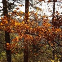 Осенью. :: нина
