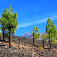 Вокруг вулкана Чиниеро :: Лариса