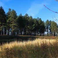 лес :: Владимир Зеленцов