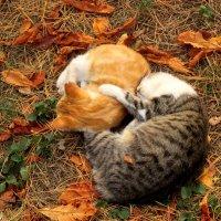 Кошки :: Нина Бутко
