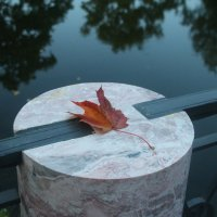 Рыжий лист кленовый... :: Наталья Герасимова