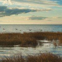 Лебеди над заливом :: Lusi Almaz