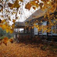 Осень в деревне :: Лариса Савченко