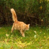Мир теплей немножко, если рядом кошка. Лана Лэнц. :: Yuri Chudnovetz