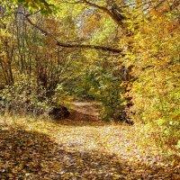 Золотая осень :: Николай Николенко