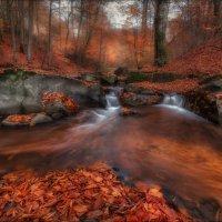 Круговорот листвы в природе :: Влад Соколовский