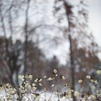 За пеленой зимы :: Алексей Коннов