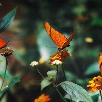 "Три сестрицы...Испания,побережье Коста Брава поблизости от Эмпуриабрава.""Парк Бабочек"" :: Александр Вивчарик"