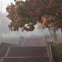 Лестница в осень :: Елена Белинская