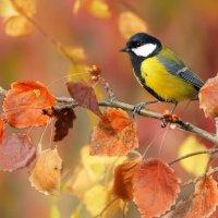 Осенние краски :: Влад