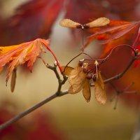 Осенние костры :: Lusi Almaz