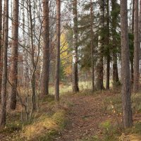Природа в октябре :: Aнна Зарубина