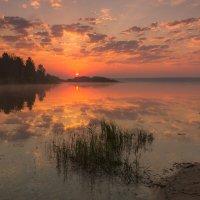 Летним утром :: Александр Тулупов